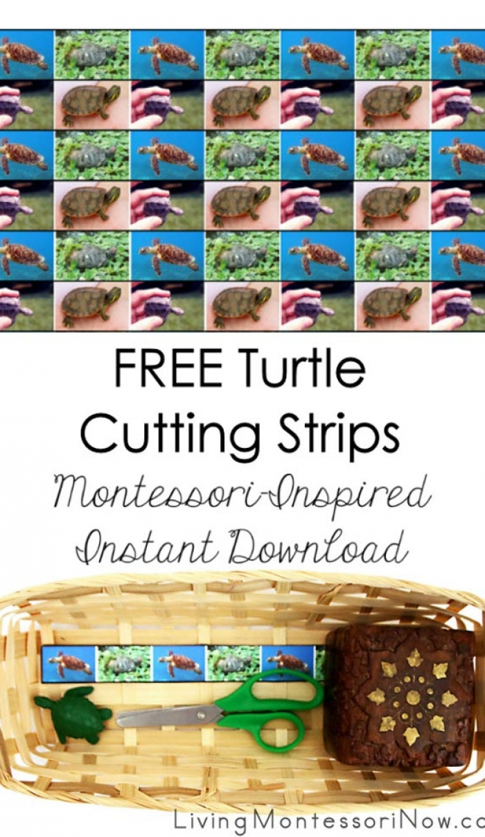 FREE Turtle Cutting Strips (Montessori-Inspired Instant Download)
