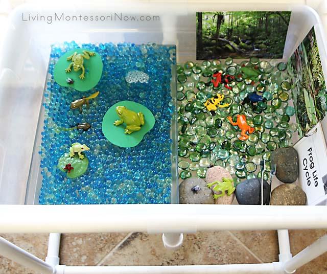 Frog Sensory Table