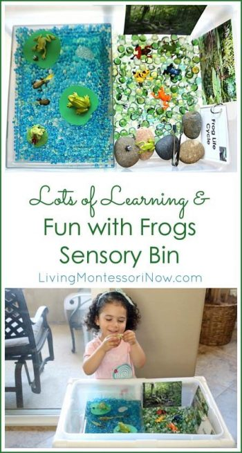 Lots of Learning & Fun with Frogs Sensory Bin