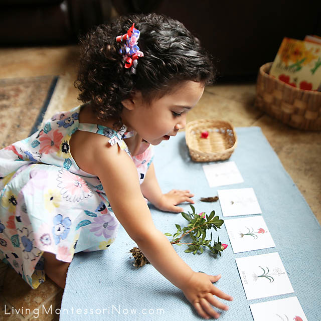 Matching Parts of the Plant Cards with Parts of an Azalea