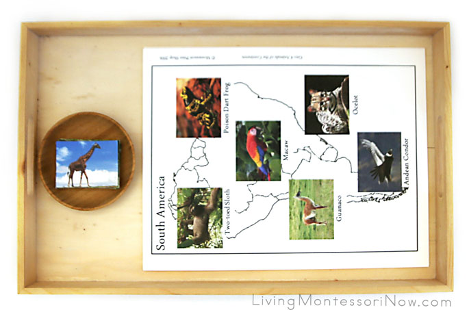Montessori Animals of the Continents Tray