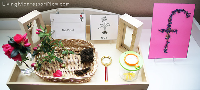 Shelf with Montessori Nature Tray with Parts of the Plant and Tactile Nature Letter F
