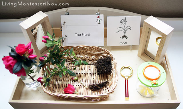 Montessori Nature Tray with Vocabulary - Parts of the Plant