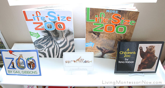 Top Zoo-Themed Shelf