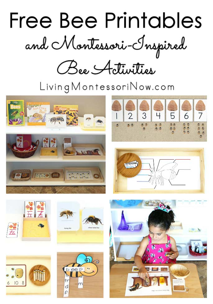 Free Bee Printables and Montessori-Inspired Bee Activities