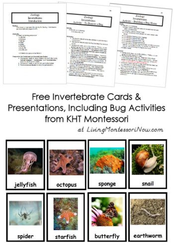 Free Invertebrate Cards and Presentations, Including Bug Activities from KHT Montessori