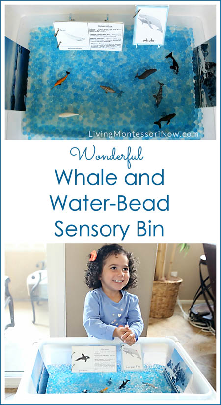Wonderful Whale and Water-Bead Sensory Bin {Free Printables}