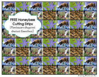 Free Honeybee Cutting Strips (Montessori-Inspired Instant Download)