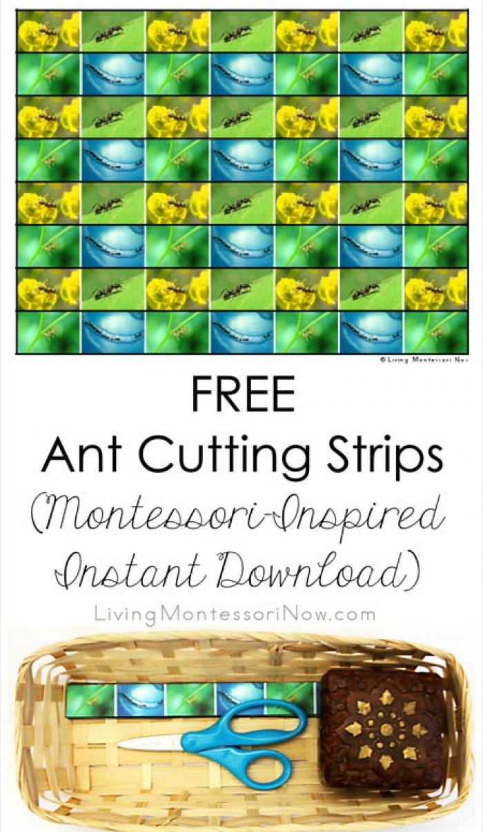 Free Ant Cutting Strips (Montessori-Inspired Instant Download)