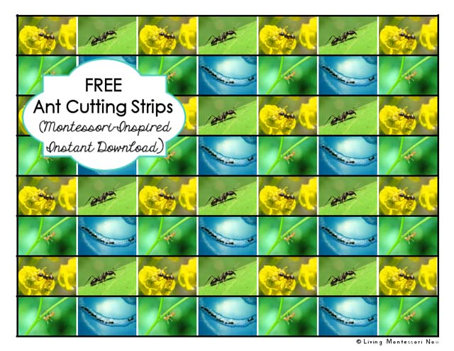 Free Ant Cutting Strips