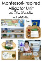 Montessori-Inspired Alligator Unit with Free Printables and Activities