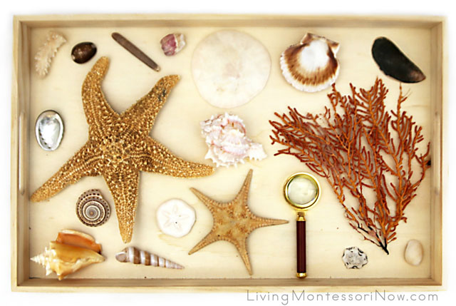Montessori Seashell and Sea Life Nature Tray