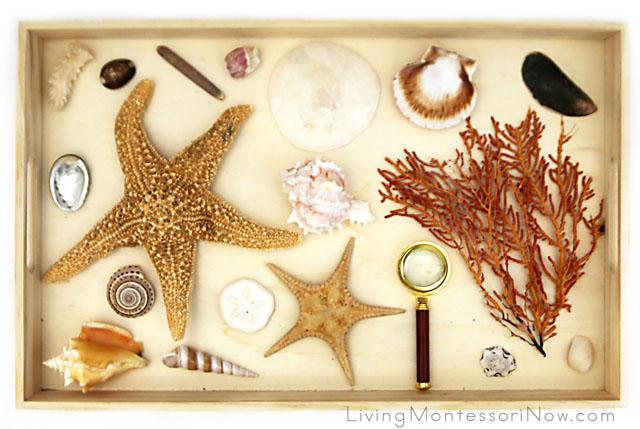 Montessori Seashell and Sea Life Nature Tray