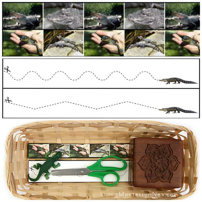 Alligator Cutting Strips with Basket and Safari Ltd Alligator