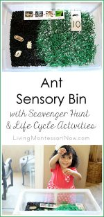 Ant Sensory Bin with Scavenger Hunt and Life Cycle Activities {Montessori Monday}