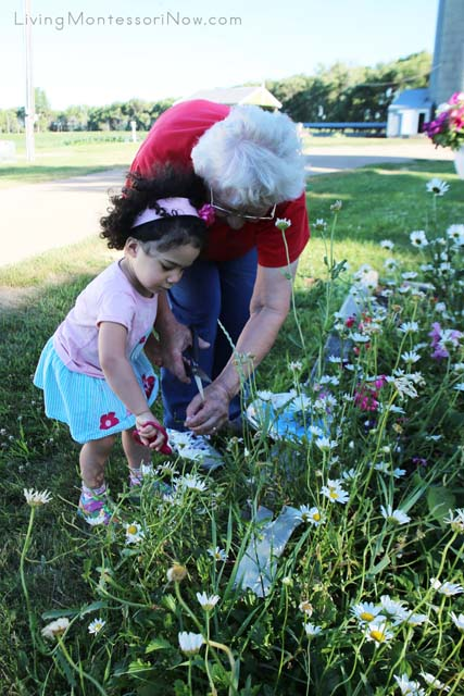 Cutting Flowers with Great Grandma