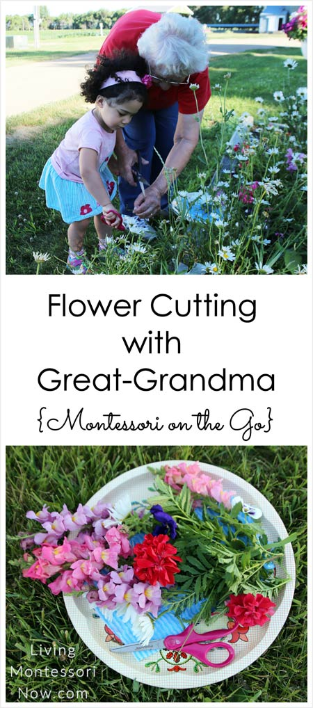 Flower-Cutting-with-Great-Grandma-{Montessori-on-the-Go}