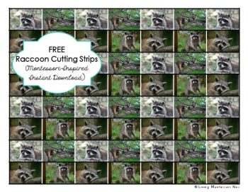 Free Raccoon Cutting Strips
