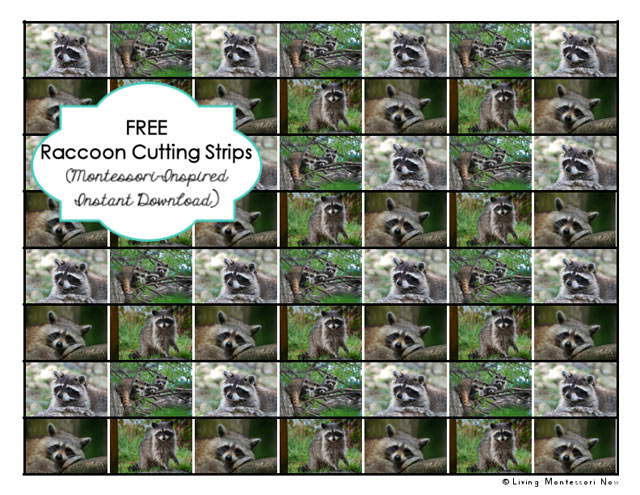 Free Raccoon Cutting Strips