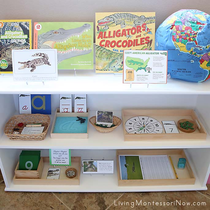 Montessori Shelves with an Alligator Theme