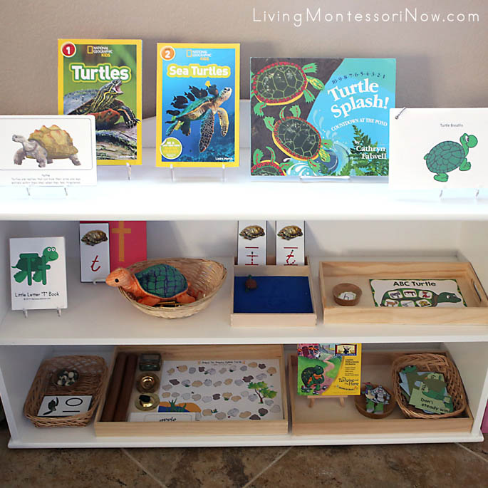 Montessori Shelves with a Turtle Theme