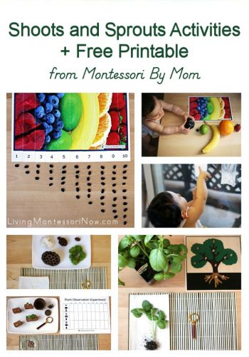 Shoots and Sprouts Activities + Free Printables from Montessori By Mom