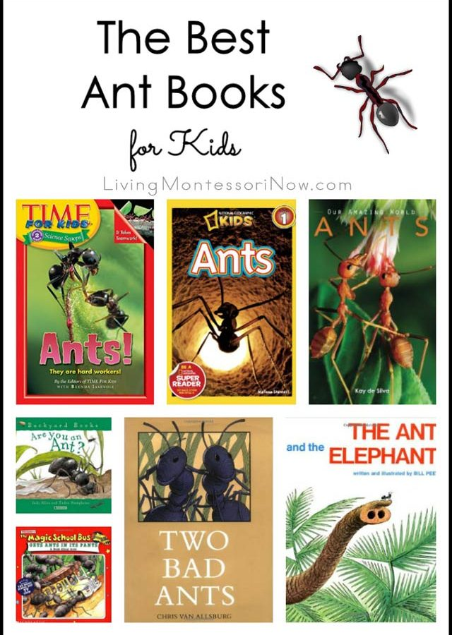 The-Best-Ant-Books-for-Kids