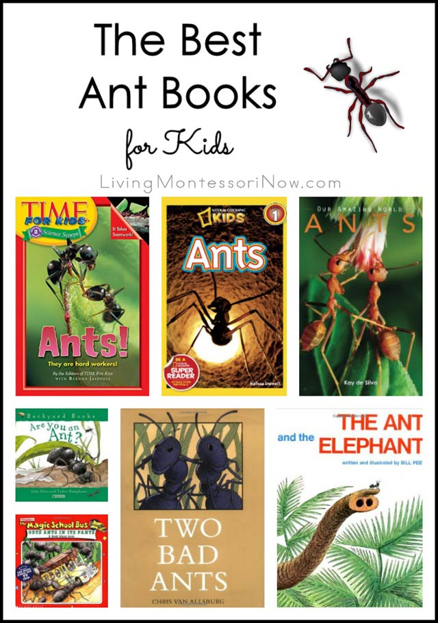 The Best Ant Books for Kids
