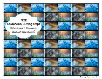 free-spiderweb-cutting-strips