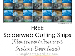 FREE Spiderweb Cutting Strips (Montessori-Inspired Instant Download)