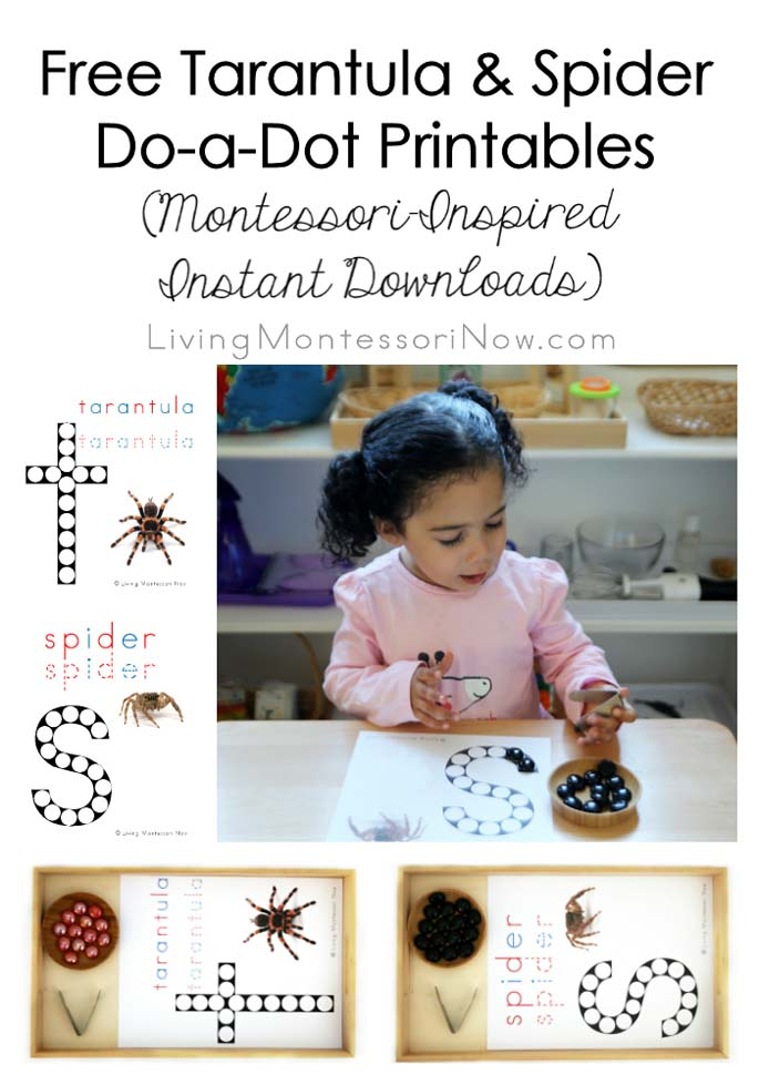 Free Tarantula and Spider Do-a-Dot Printables (Montessori-Inspired Instant Downloads)