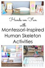 Hands-on Fun with Montessori-Inspired Human Skeleton Activities