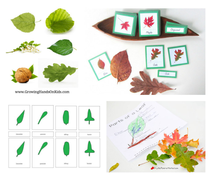 Montessori-Inspired Leaf Printables