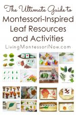 The Ultimate Guide to Montessori-Inspired Leaf Resources and Activities