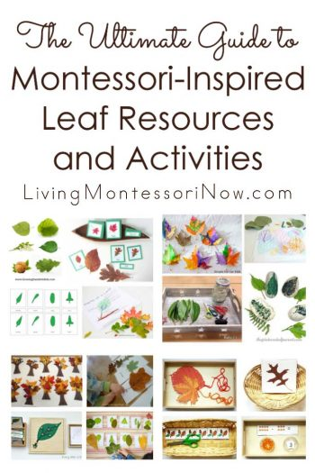 The Ultimate Guide to Montessori-Inspired Leaf Activities and Resources
