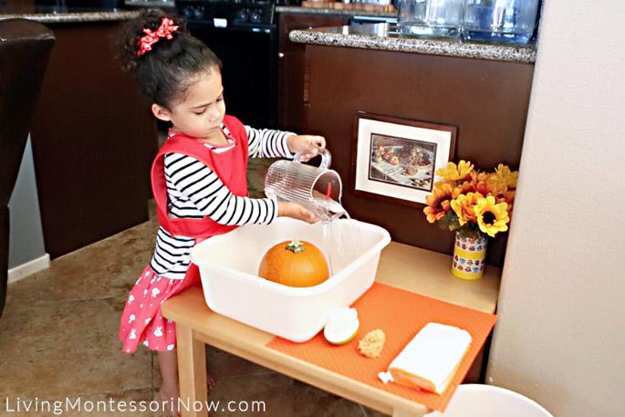 Pouring Water into Pumpkin Scrubbing Tub