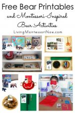 Free Bear Printables and Montessori-Inspired Bear Activities