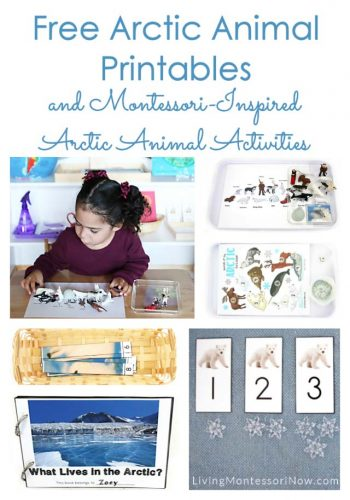 Free Arctic Animal Printables and Montessori-Inspired Arctic Animal Activities