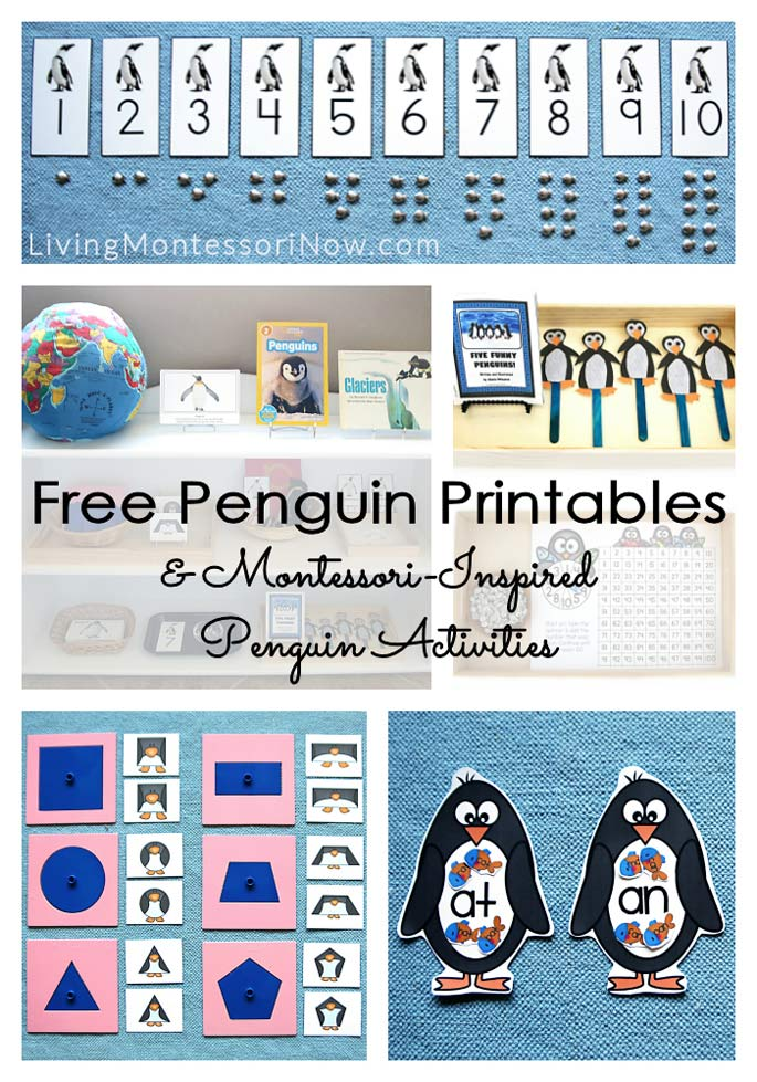 picture regarding Penguins Printable Schedule identified as Free of charge Penguin Printables and Montessori-Motivated Penguin
