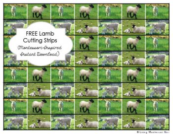 Free Lamb Cutting Strips