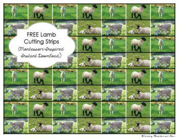 Free Lamb Cutting Strips