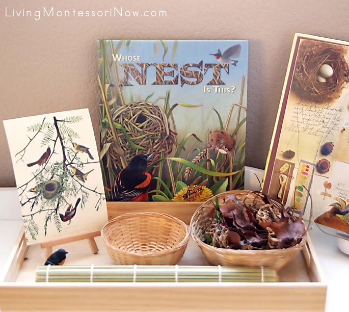 Montessori Nature Tray with Bird-Themed Nest Building and Art Appreciation