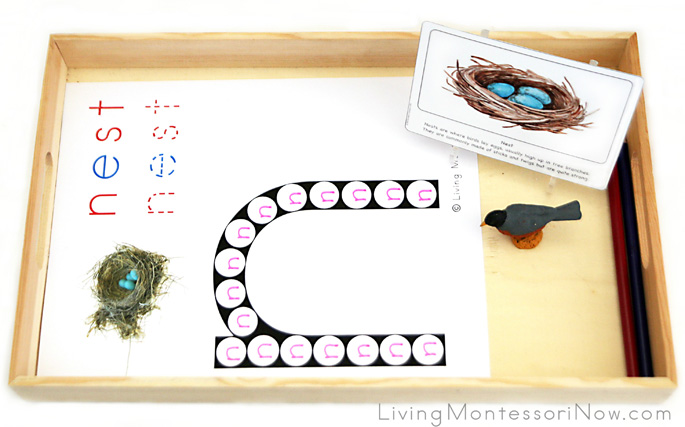Nest Do-a-Dot Letter N Tray for Tracing N's within an N