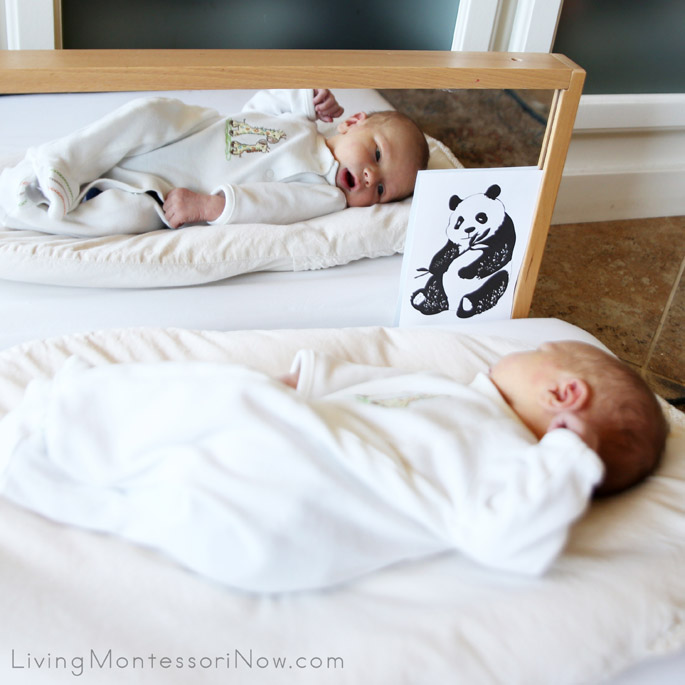 Concentrating on Image in Mirror Plus Black and White Panda Image (4 Days Old)