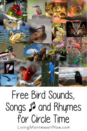Free Bird Sounds, Songs, and Rhymes for Circle Time