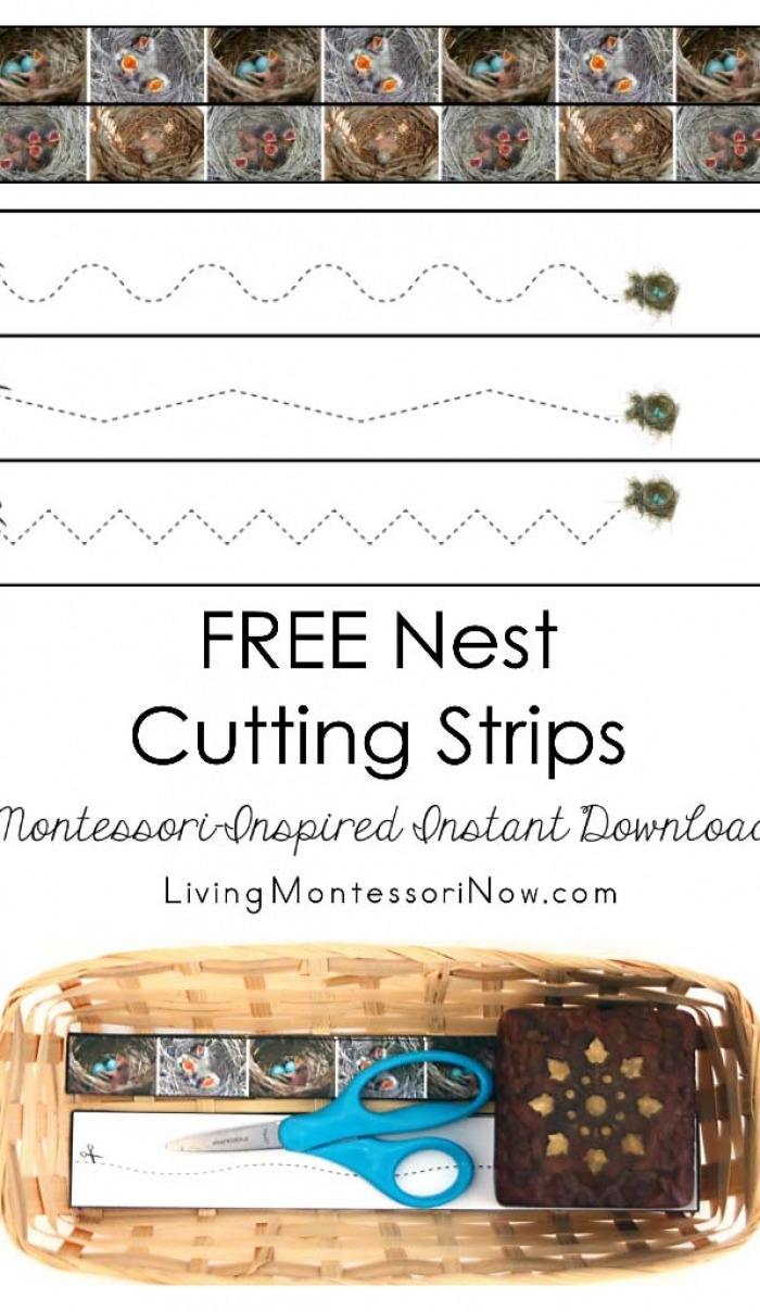 Free Nest Cutting Strips (Montessori-Inspired Instant Download)