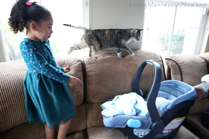 Using Montessori Social Graces Work to Introduce Cat to Her New Cousin