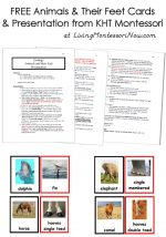 Free Animals and Their Feet Cards and Presentation from KHT Montessori