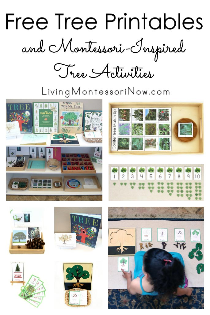 Free Tree Printables and Montessori-Inspired Tree Activities