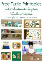 Free Turtle Printables and Montessori-Inspired Turtle Activities